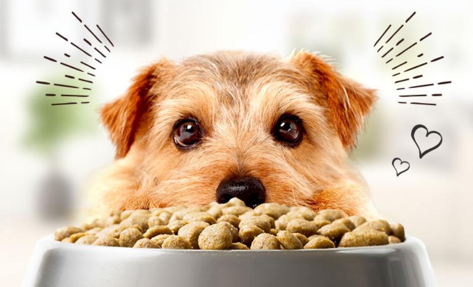 リブドッグ(LIVE DOG)愛犬ドッグフード口コミ・効果~通販販売店舗情報まとめ!