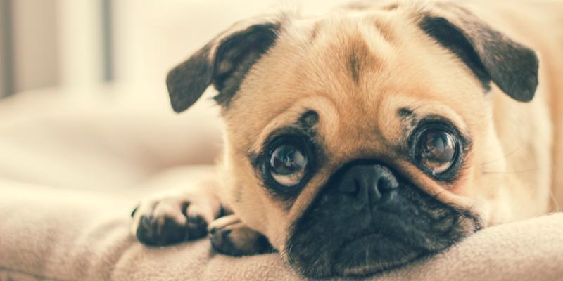 リブドッグ(LIVE DOG)全成分・副作用!子犬~成犬まで全犬種・全年齢オールステージ対応総合栄養食の真実!
